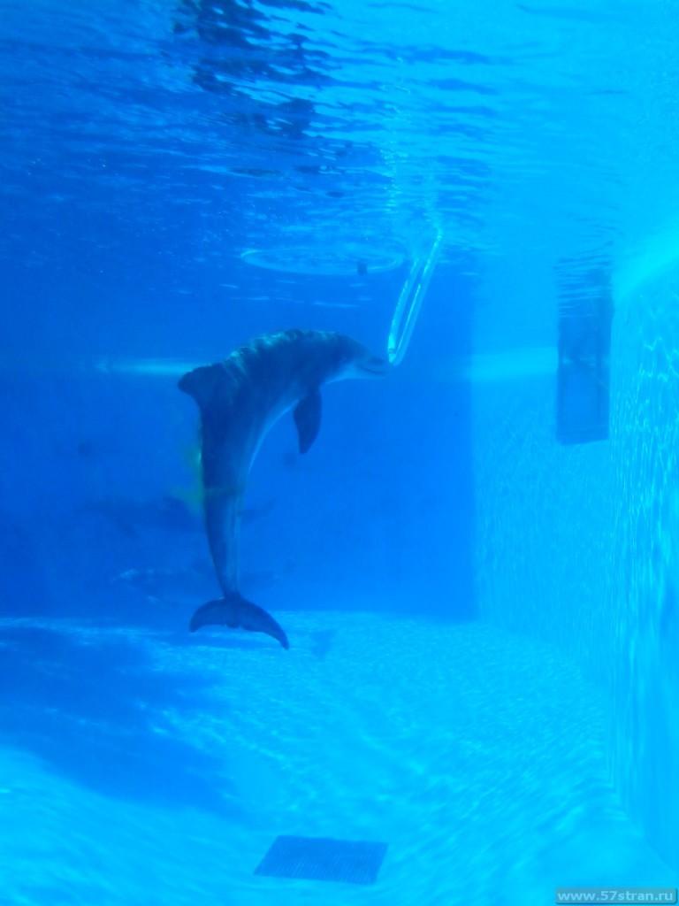 Дельфины в Вегасе