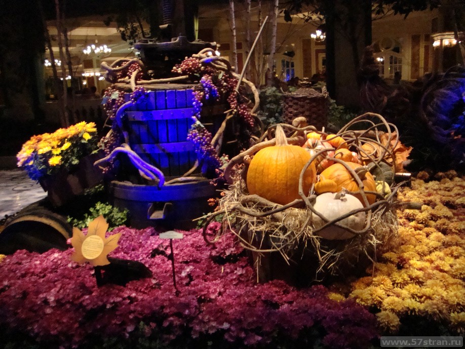 Иеддфпшщ Conservatory на Halloween