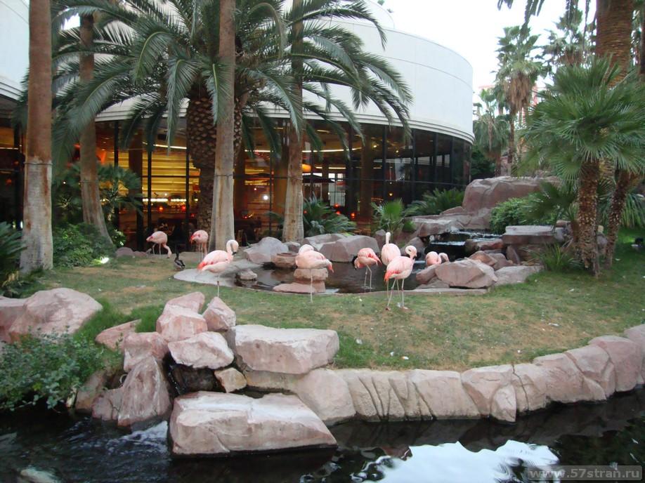 Розовые фламинго в Лас-Вегасе