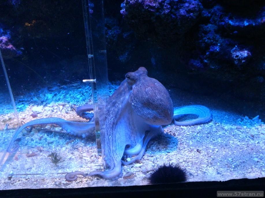 Аквариум Монако (Музей океанографии)