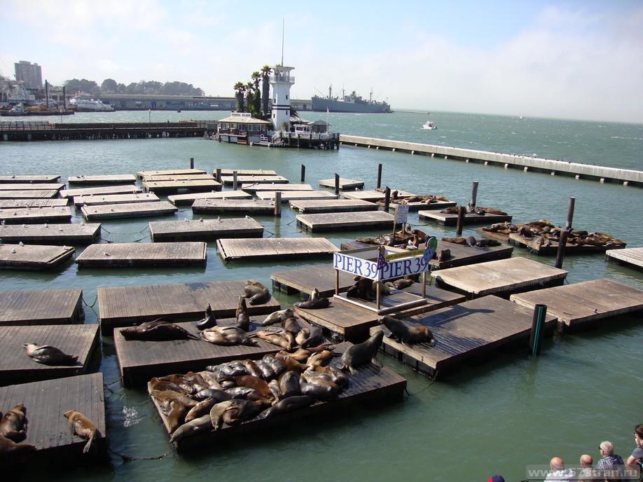 Морские котики в Сан Франциско
