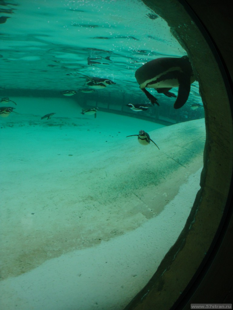 Penguin beach - London zoo