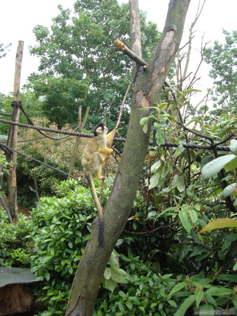 Лондонский зоопарк - обезьяны