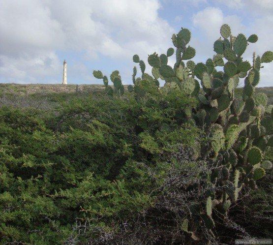 Калифорнийский маяк (Аруба)