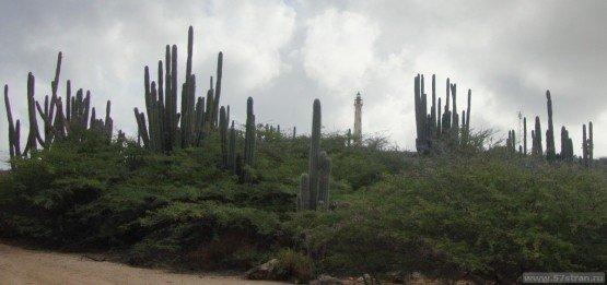 Кактусовая роща - Arikok National park