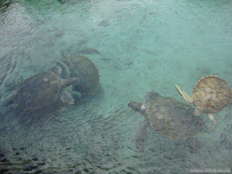 Черепахи Мексика