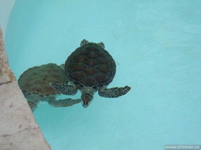 Черепахи - парк Шкарет