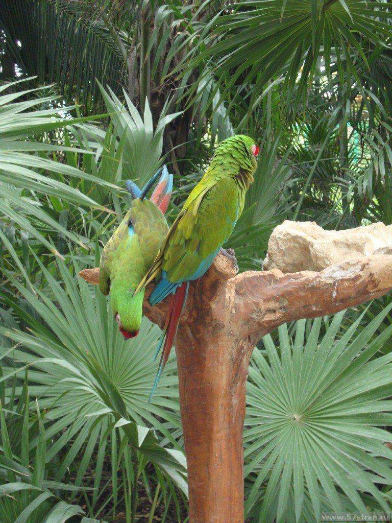 Попугаи в Канкуне