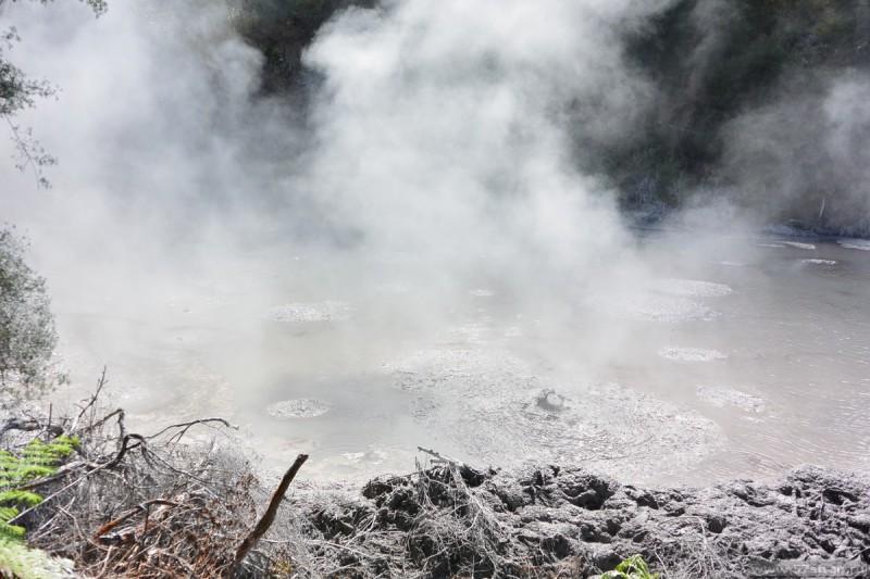 Mud pools Rotorua