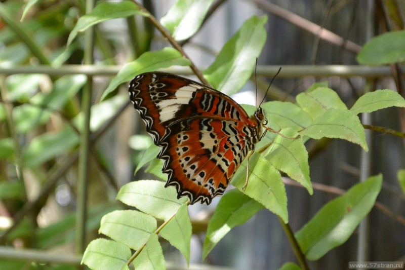 Butterfly sanctuary Cairns