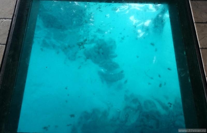 Overwater Bungalow - вид вниз