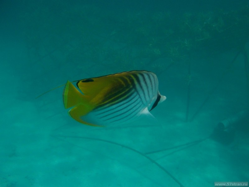 Рыбки на Bora Bora