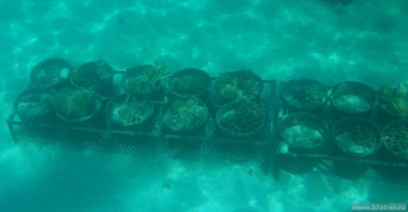 Искуственный риф Полинезия