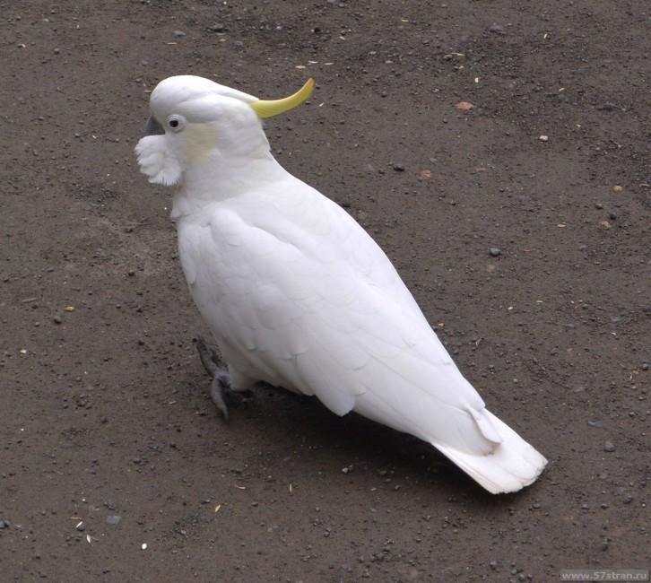 Попугаи Юг Австралии
