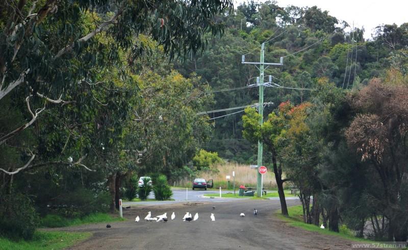 Попугаи на дороге