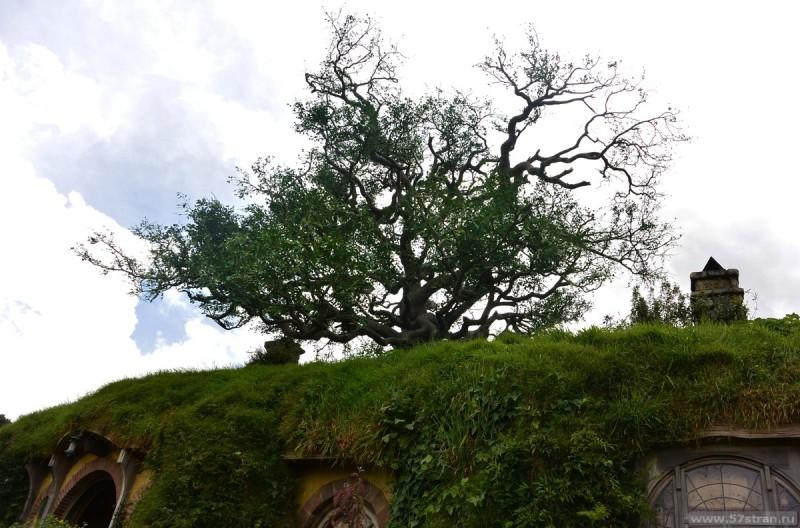 раскидистый дуб Хоббит