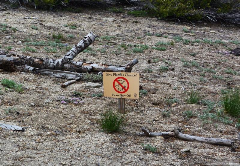 Табличка: «Дайте растениям шанс! Держитесь тропинки
