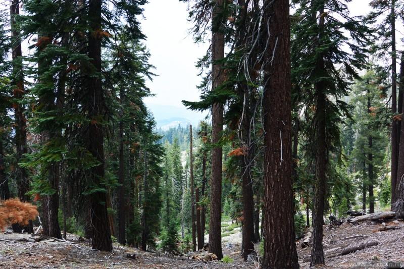 Горный лес Йосемити