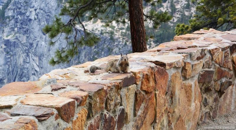 Белка парк Йосемити