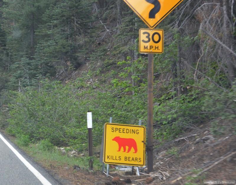 Знак: «Превышение скорости убивает медведей